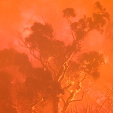photograph of burning tree